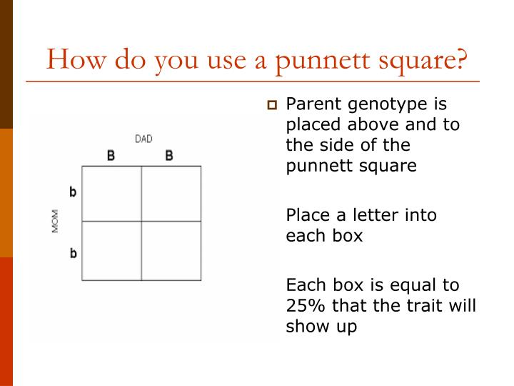 Parent genotype is placed above and to the side of the punnett square