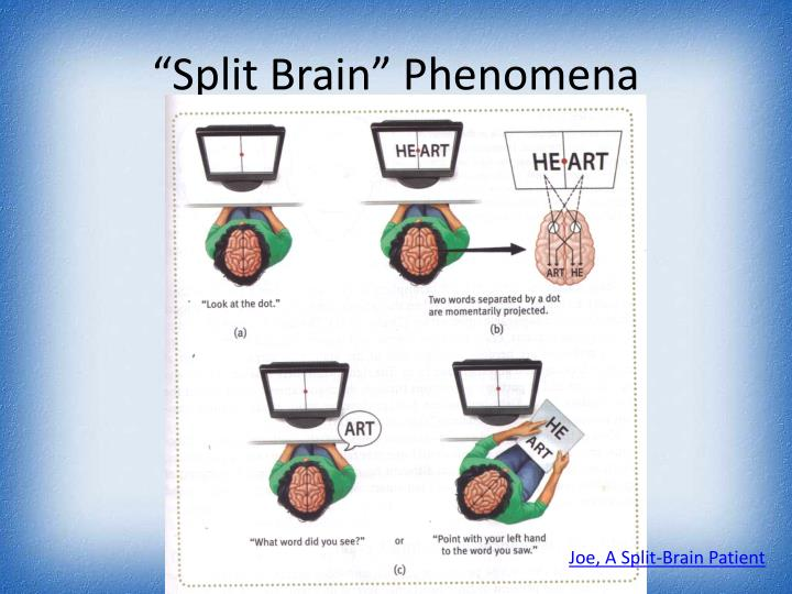 """Split Brain"" Phenomena"