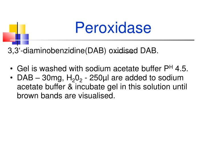 Peroxidase