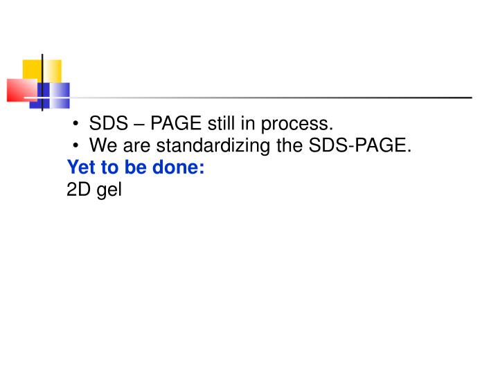 SDS – PAGE still in process.