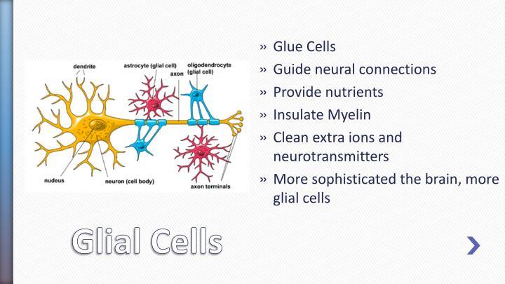 Glue Cells