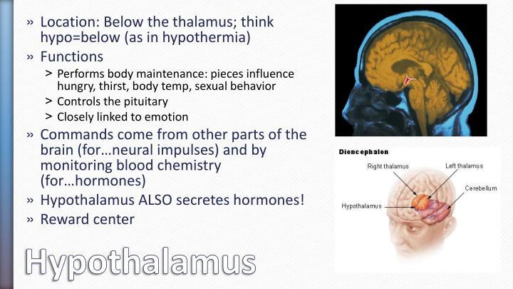 Location: Below the thalamus; think hypo=below (as in hypothermia)