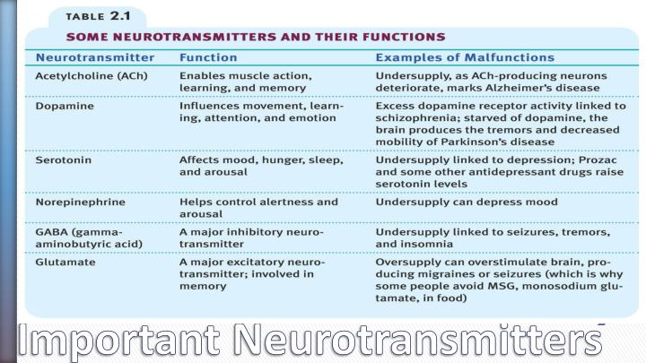 Important Neurotransmitters