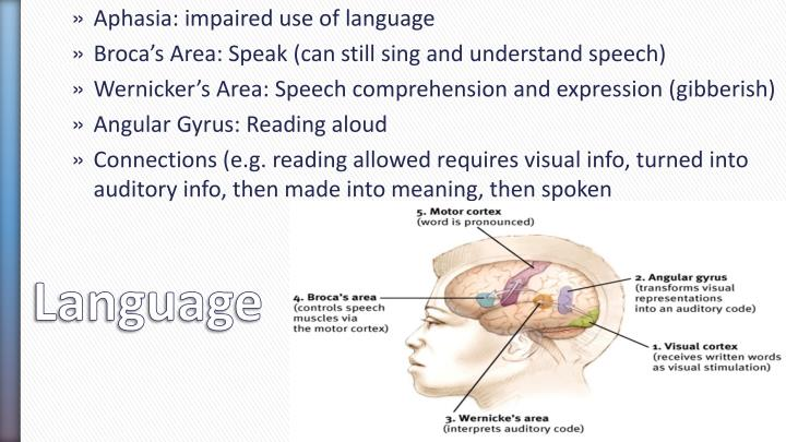 Aphasia: impaired use of language