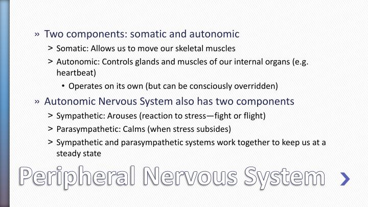 Two components: somatic and autonomic