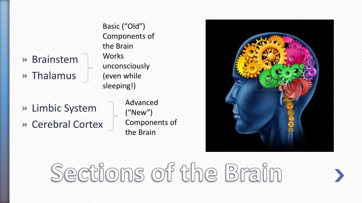 "Basic (""Old"") Components of the Brain"