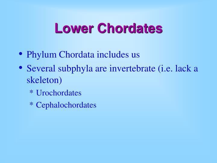 Lower Chordates