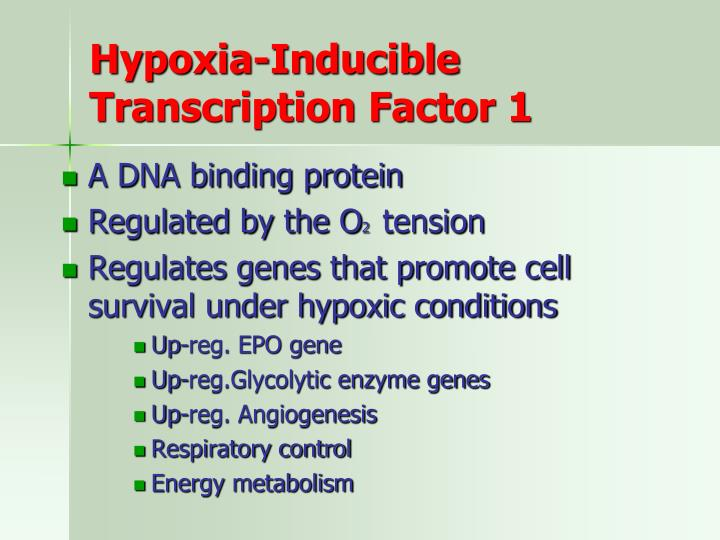 Hypoxia-Inducible Transcription Factor 1