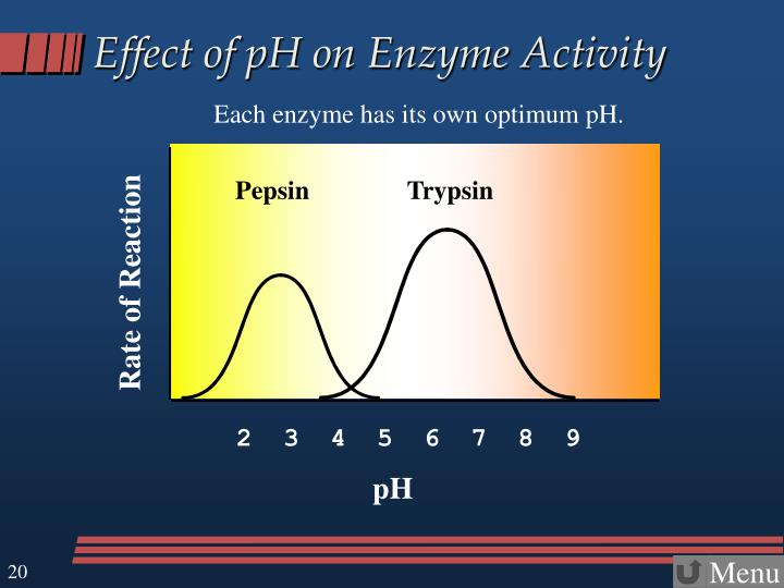 Effect of pH on Enzyme Activity