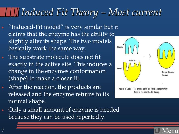 Induced Fit Theory – Most current