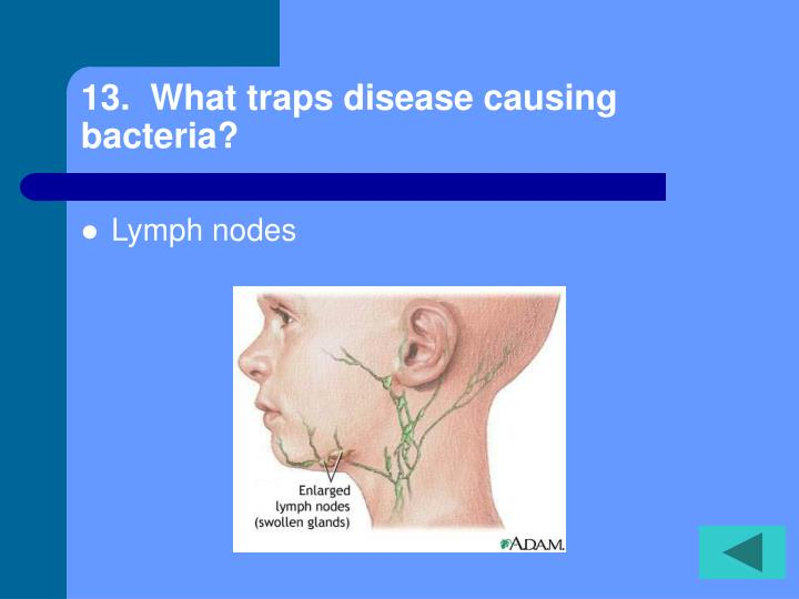 13.  What traps disease causing bacteria?