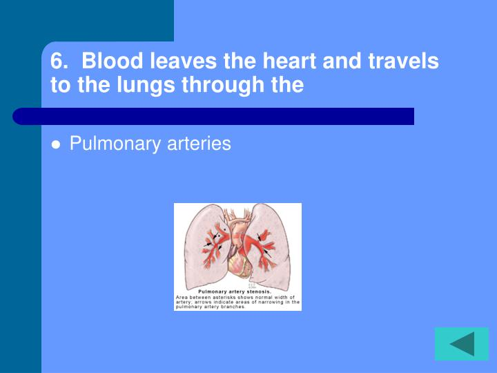 6.  Blood leaves the heart and travels to the lungs through the