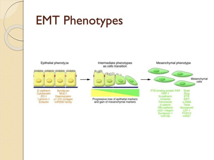 EMT Phenotypes