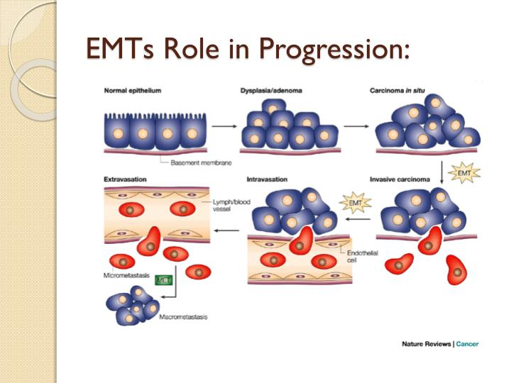 EMTs Role in Progression: