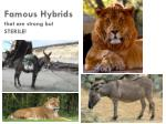 famous hybrids that are strong but sterile