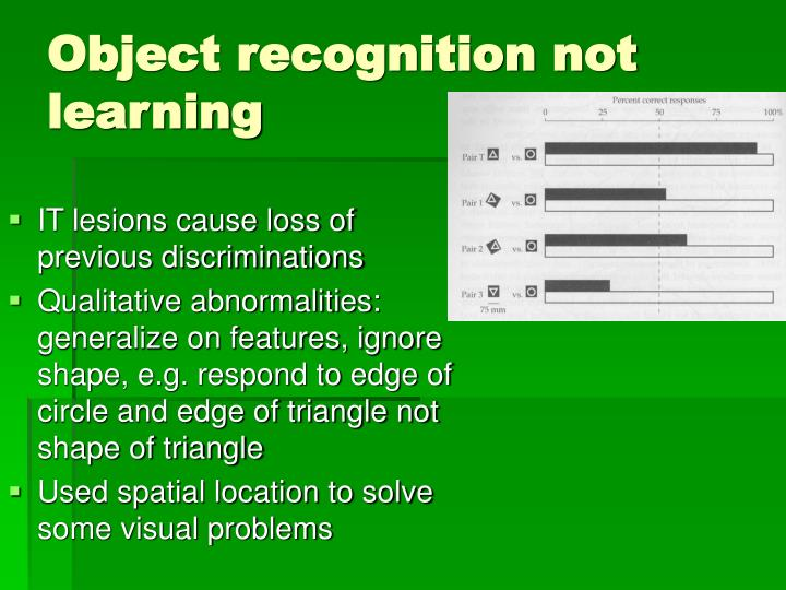 Object recognition not learning