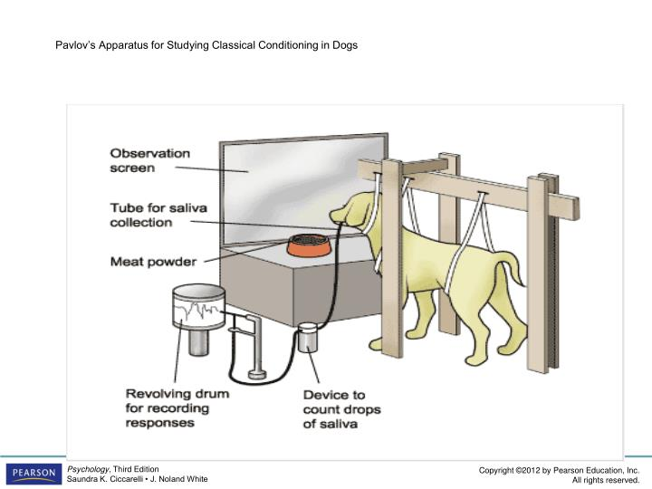 Pavlov's Apparatus for Studying Classical Conditioning in Dogs