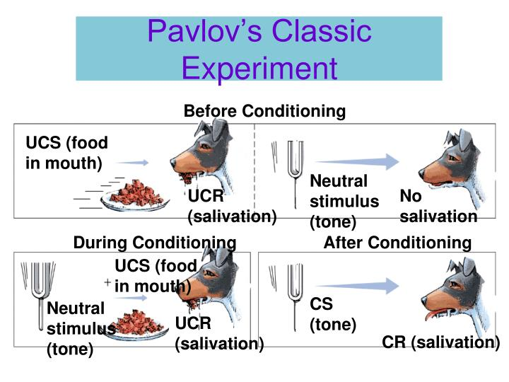 Pavlov's Classic Experiment