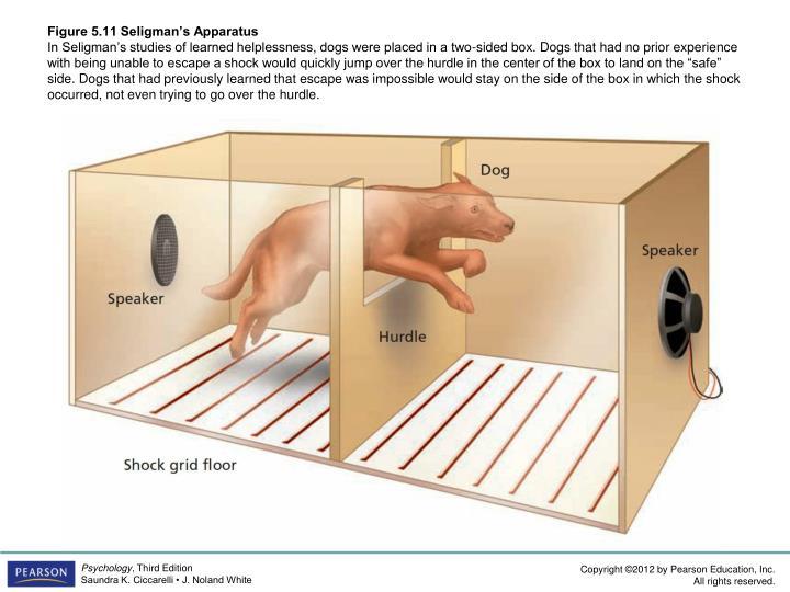 Figure 5.11 Seligman's Apparatus