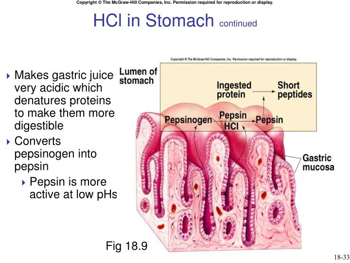 HCl in Stomach