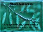 black oatgrass
