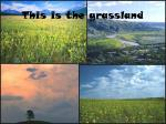 this is the grassland