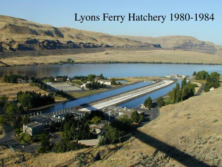 Lyons Ferry Hatchery 1980-1984