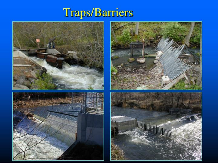 Traps/Barriers