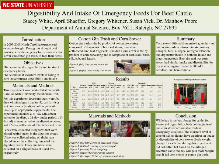 Digestibility And Intake Of Emergency Feeds For Beef Cattle