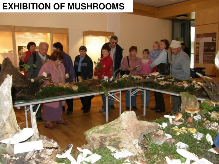 EXHIBITION OF MUSHROOMS