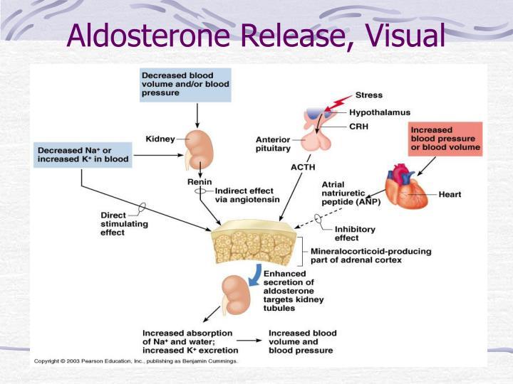 Aldosterone Release, Visual