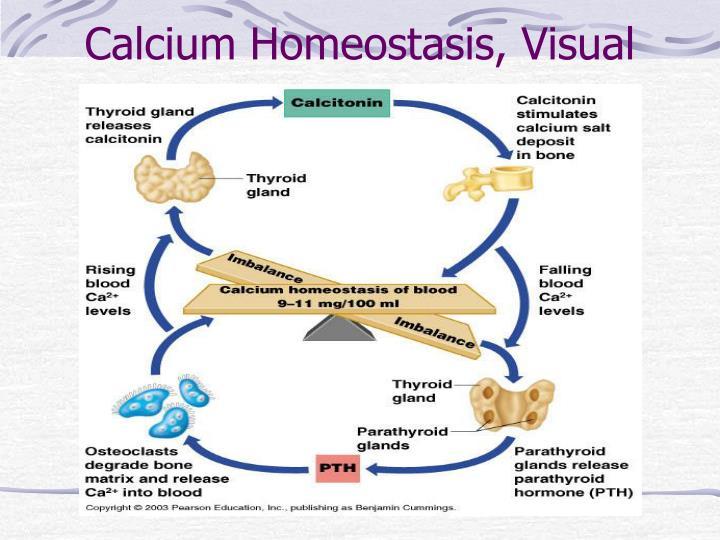 Calcium Homeostasis, Visual