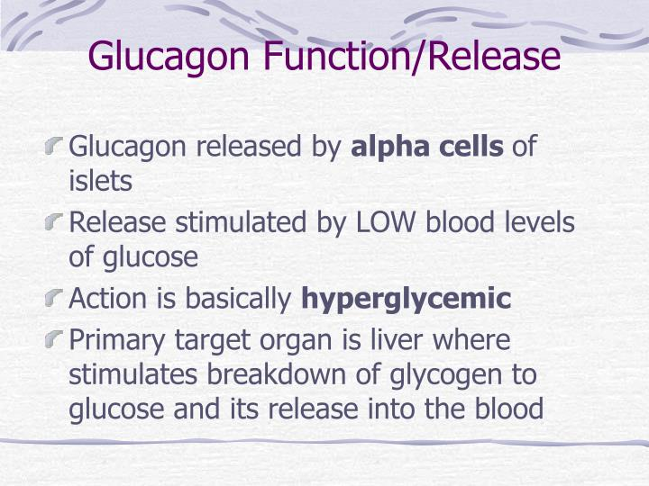 Glucagon Function/Release