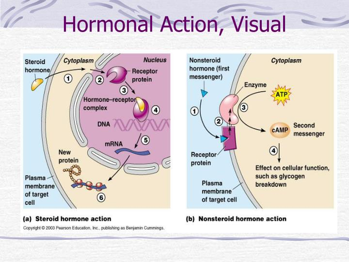 Hormonal Action, Visual
