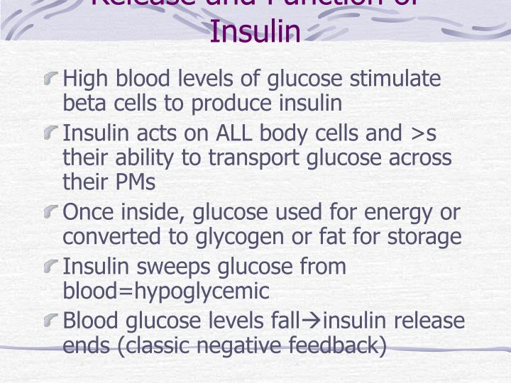 Release and Function of Insulin