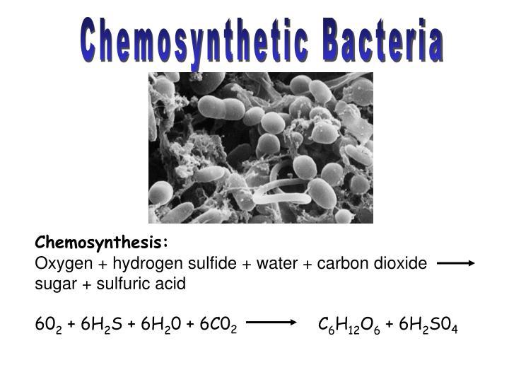 Chemosynthetic Bacteria