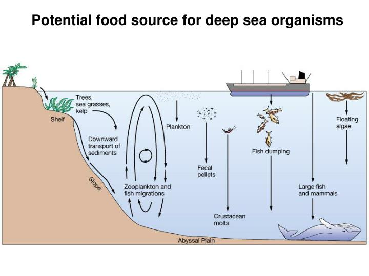 Potential food source for deep sea organisms