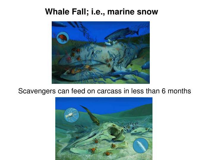 Whale Fall; i.e., marine snow