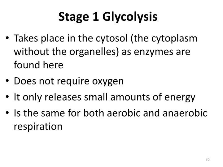 Stage 1 Glycolysis