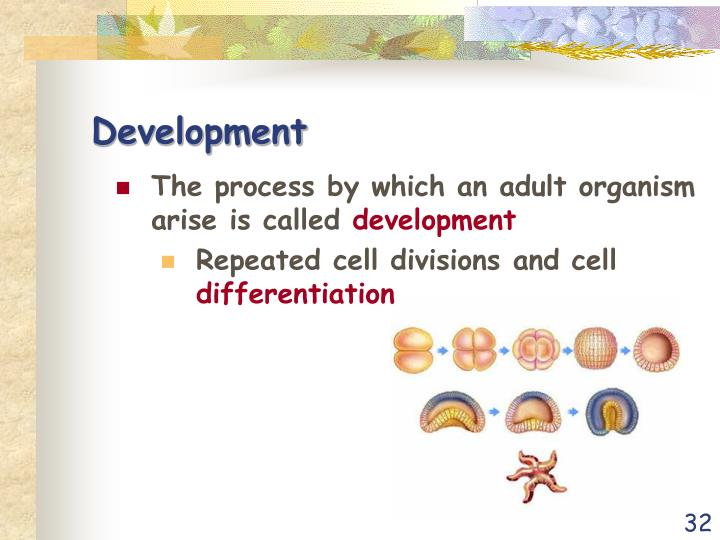 The process by which an adult organism arise is called