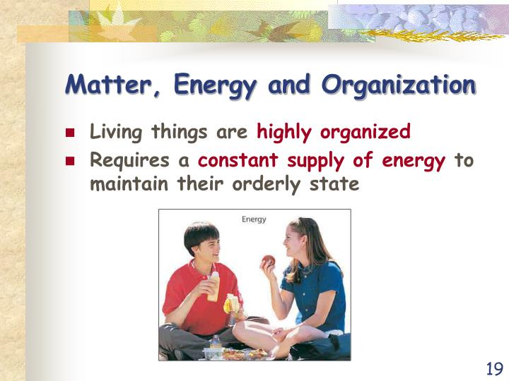 Matter, Energy and Organization