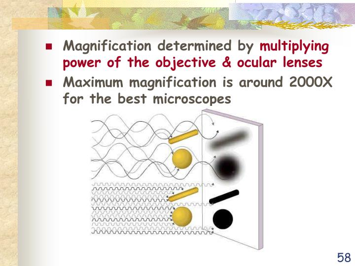 Magnification determined by
