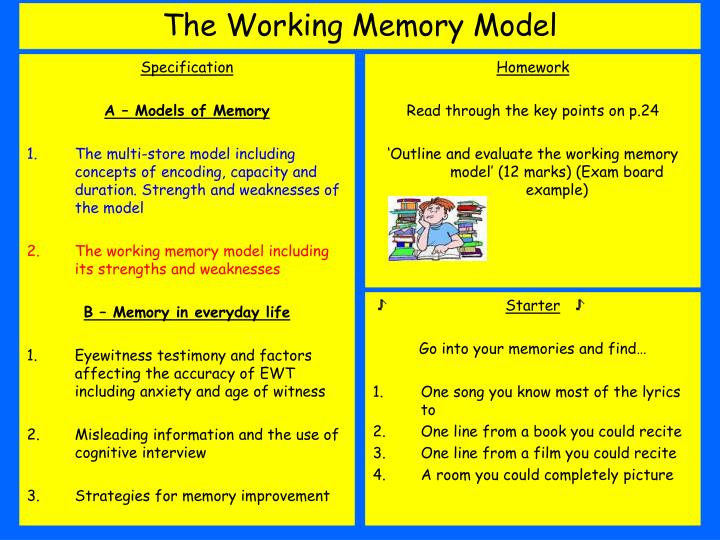 outline and evaluate the multi store model of memory essay