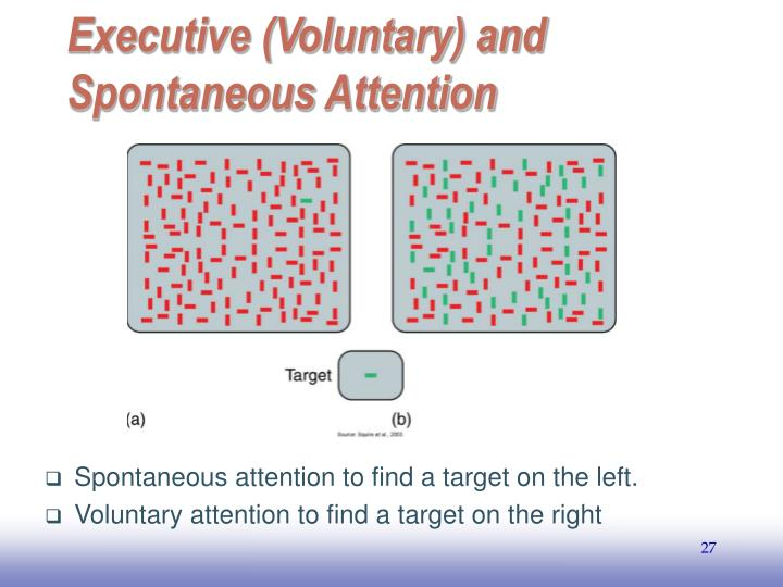 Executive (Voluntary) and Spontaneous Attention