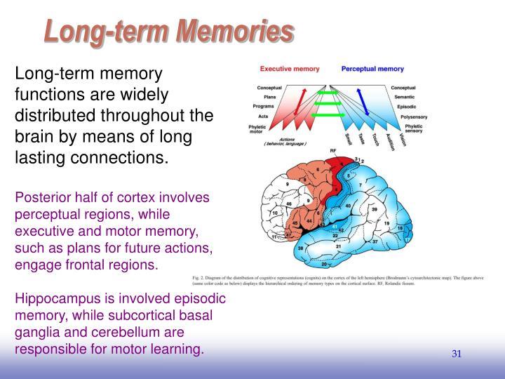 Long-term Memories