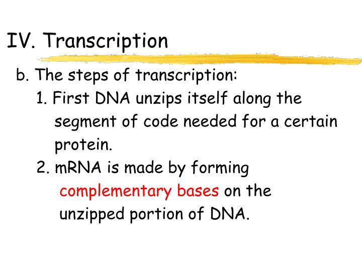 IV. Transcription