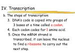 iv transcription2