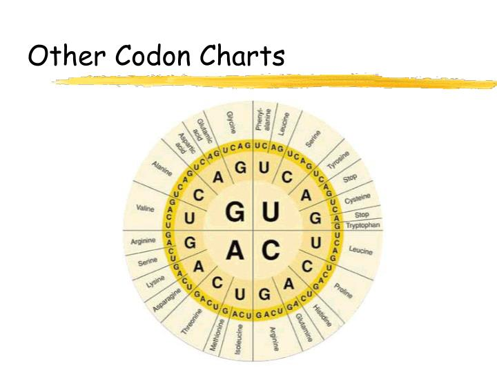 Other Codon Charts