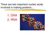there are two important nucleic acids involved in making proteins