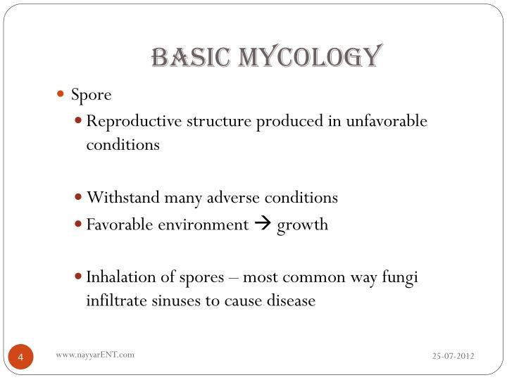 Basic Mycology